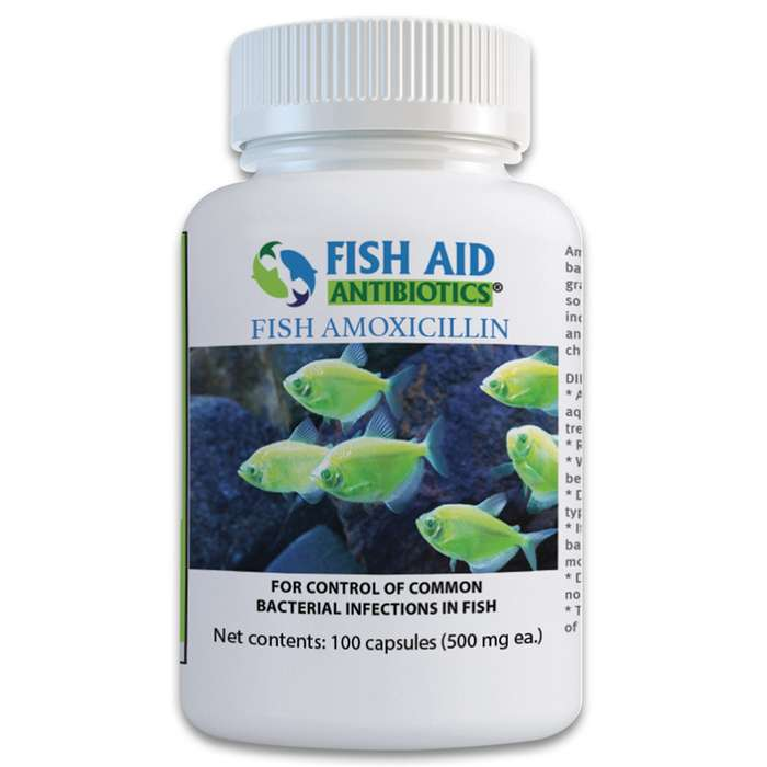 Amoxicillin is a broad spectrum antibiotic that controls some common bacterial diseases that your ornamental fish may fall victim