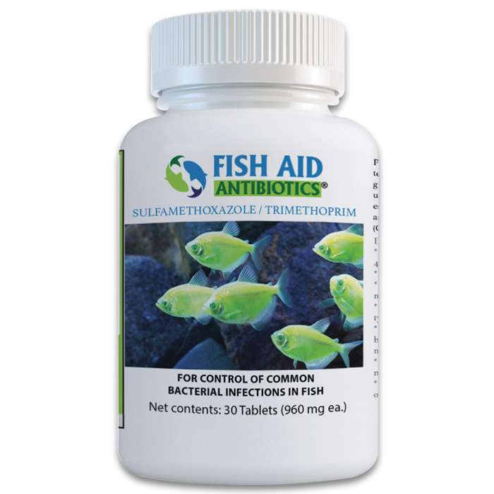 Sulfa exerts a bactericidal action on gram-positive and gram-negative bacteria that your ornamental fish may fall victim to