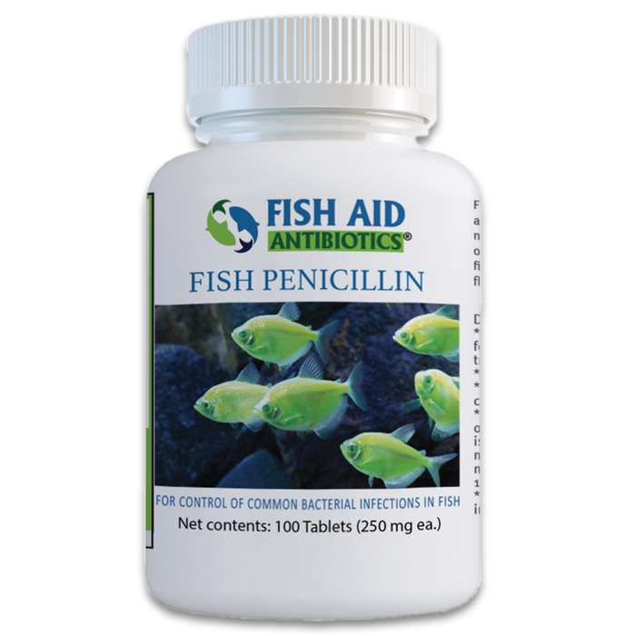 Penicillin is effective against treating gram-negative and gram-positive bacteria that your ornamental fish may fall victim to