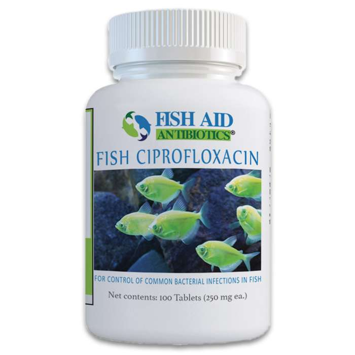 Ciproflocacin is effective against treating gram-negative and some gram-positive bacteria that your ornamental fish may fall victim to