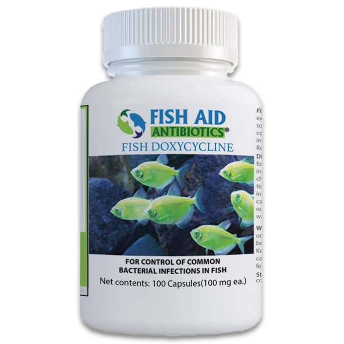 Doxycycline exerts a bactericidal action on gram-positive and gram-negative bacteria that your ornamental fish may fall victim to