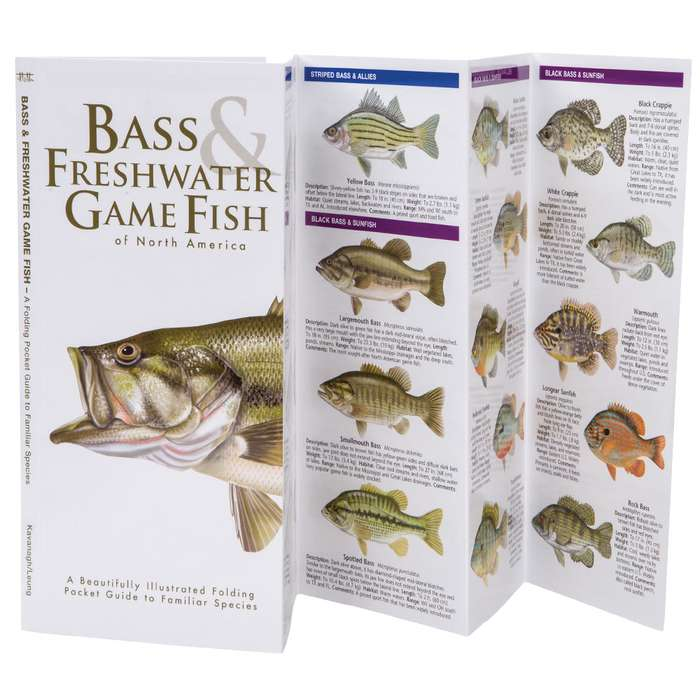 Bass And Freshwater Game Fish Of North America Folding Guide