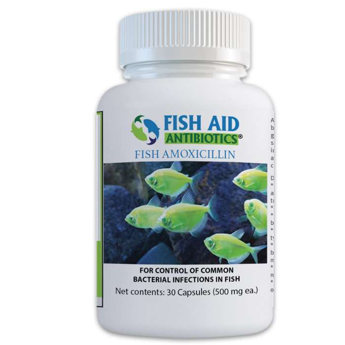 Fish Mox Forte 500 mg Amoxicillin Antibiotics - 30 Tablets