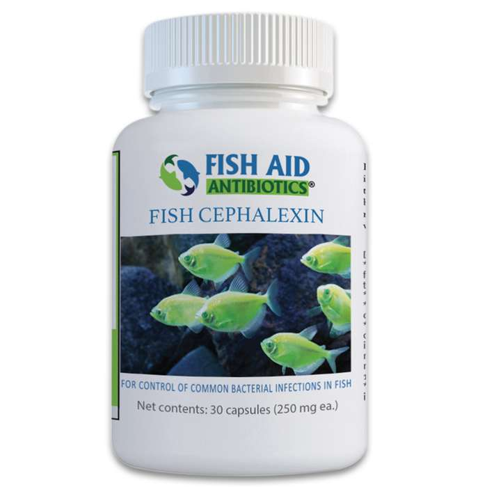 Cephalexin is effective against treating a wide variety of non-specific bacterial infections that your ornamental fish may fall victim to