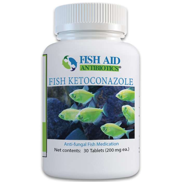 Ketoconazole is a broad-spectrum anti-fungal medication used for topical and systemic fungal infections that your ornamental fish may fall victim to
