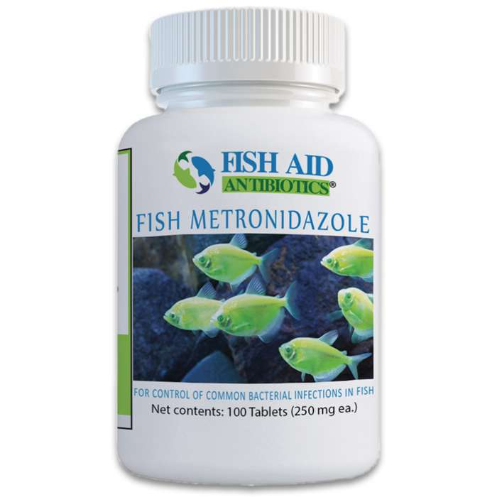 Metronidazole is effective against treating gram-negative and gram-positive bacteria that your ornamental fish may fall victim to
