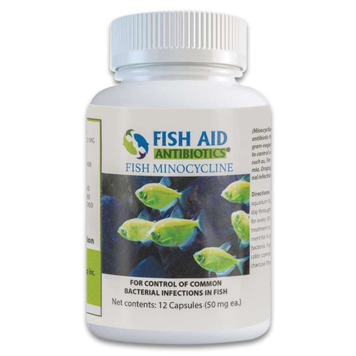 Minocycline is a broad-spectrum antibiotic that controls gram-positive and gram-negative bacteria that your ornamental fish may fall victim to