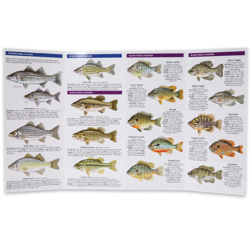 Bass and freshwater game fish of north america folding for Freshwater fishing games