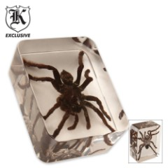 Real Tarantula Spider Lucite Paperweight