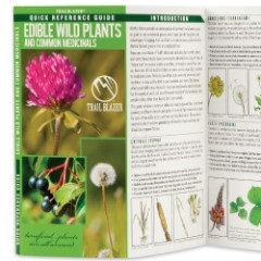 Edible Wild Plants And Common Medicinals Folding Guide