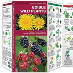Edible Wild Plants Folding Pocket Guide