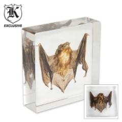 Real Bat Paperweight Clear Lucite