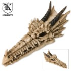 Fantasy Décor Resin Dragon Skull Wall Mountable