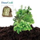 Dunecraft Tasty Herb Mix Growing Kit in Burlap Bag