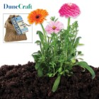 Dunecraft Heirloom Cut Flowers Mix in Burlap Bag