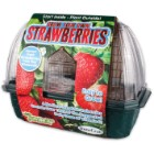 Sprout N Grow Greenhouse Strawberries
