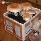 Grow Your Own Mushroom Kit – Crimini